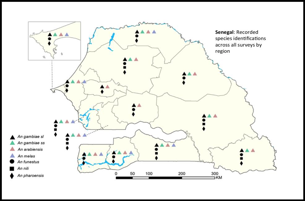 Figure 3 : Espèces identifiées par région au Sénégal